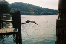 plongeon_lac_orta